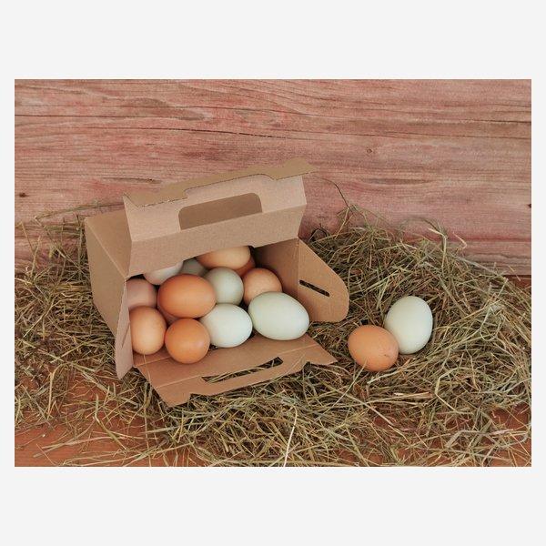Trägerkarton für Eier